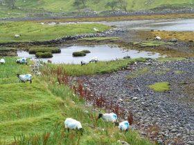 Gaeltacht Course Pastime Chonamara (51)